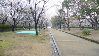 20090404sakura2