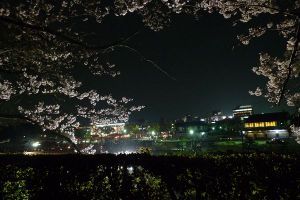 2009sakura3